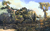 Centrosaurus dinosaur, illustration