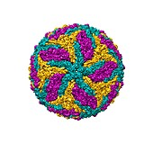 Dengue virus, computer model