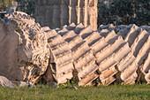 Column drums, Temple of Olympian Zeus.