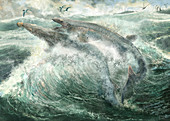 Globidens extinct marine reptiles, illustration