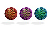 Covid-19 coronavirus variants, illustration