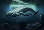Livyatan extinct sperm whale, illustration