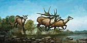 Irish elk, illustration