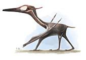 Pterodactylus flying reptile, illustration