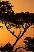 Bird in tree at sunset