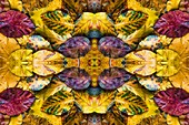 Autumn leaves, abstract image