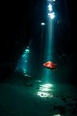 Sabre squirrelfish, composite image