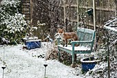 Red fox in a snowy garden