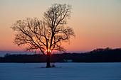 Winter sunset over a Michigan farm, USA