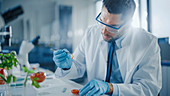 Scientist in safety glasses examining tomato