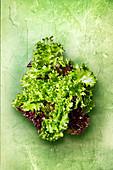 Frischer Salat auf grünem Untergrund