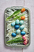 Colorful dyed Easter eggs in different shades of blue