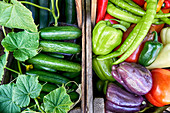Colorful organic vegetables in wooden boxes