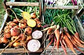 Freshly harvested organic vegetables
