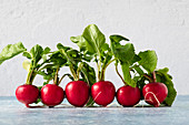 Radishes lined up in a straight row