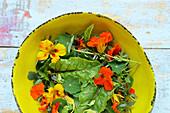 Wild herb salad with nasturtium flowers