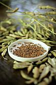 Radish seeds preparation on wood table inside