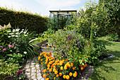 Sommerlicher Schrebergarten mit Gewächshaus, Weg zwischen Blumenbeeten und Hochbeeten
