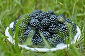 Blackberries in plate on green grass