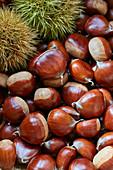 Bouches de Betizac big chestnuts close up
