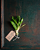 Bunch of wild garlic with a paper tag