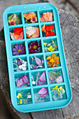 Colored flowers ice cubes