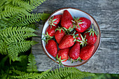 Top view of freshly picked strawberries bowl with fern leaves on grey wood outside