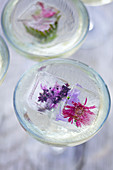 Two cocktail glasses with flowers ice cubes