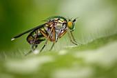 Semaphore fly