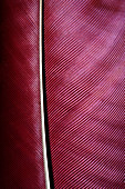 Feather of Knysna turaco bird