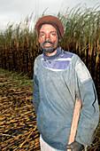 Man cutting burnt sugar cane