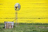 Rapeseed fields in flower