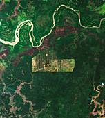 Deforestation in Papua, Indonesia, satellite image