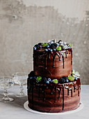 Two-tier chocolate cake decorated with blueberries and succulents