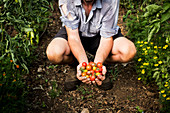 Person holding bunch of freshly picked cherry tomatoes