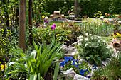 Frühling im Schrebergarten mit Küchenschelle, Frühlings-Enzian, Tulpen und Rosen