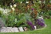 Frühlingsbeet mit Blaukissen, Tulpen, Lavendel und Rosen