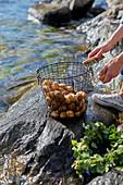 Washing potatoes on shore