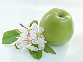 Grüner Granny Apfel und Apfelblüte