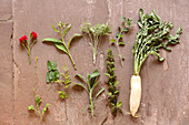 Old herbs (roses, ormennig, comfrey, medicinal herb, mugwort, wormwood, sage, adorn, nettle, radish)