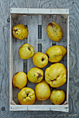 Quince fruits in wood punnet