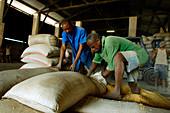 Corn production, Democratic Republic of Congo