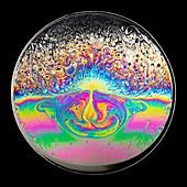 Acoustic properties of soap films