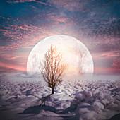 Moon in a snowy landscape, illustration