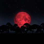 Trees silhouetted by huge red moon, illustration