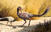 Albinykus dinosaur, illustration