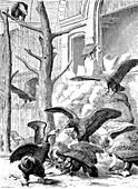 Birds of prey aviary, Hamburg Zoo, Germany, illustration