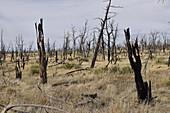 Forest fire damage, California, USA