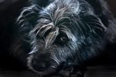 Crossbreed dog portrait