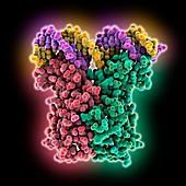 Regulator LuxR complexed with DNA, molecular model